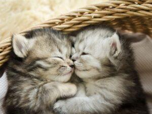 Soñar gatos 1