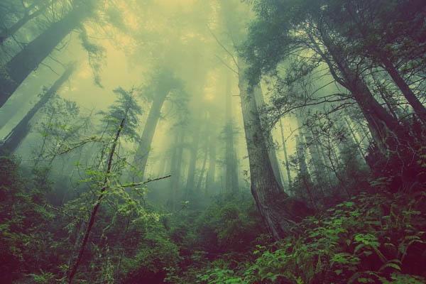 que significa soñar con bosque