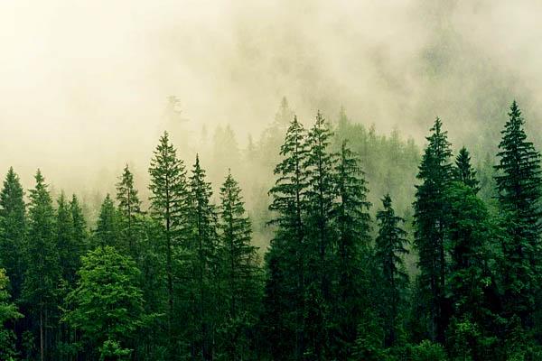 significado sueños de bosque